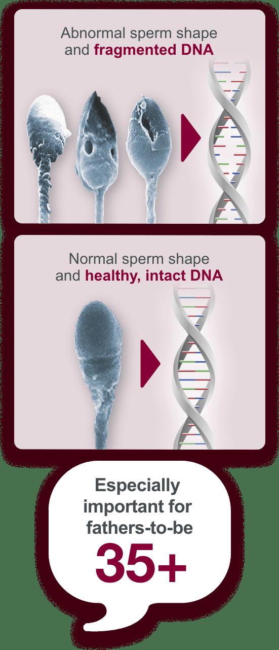 Sperm repair